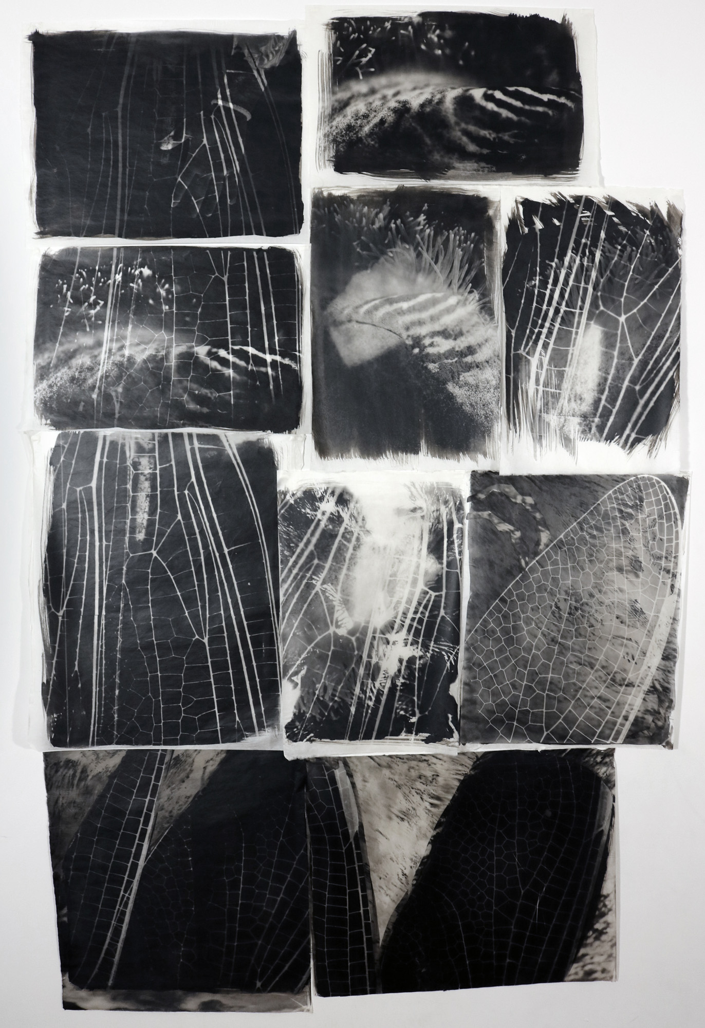 An installation of dragonfly wing palladium prints: from micro to macro, our world can expand.